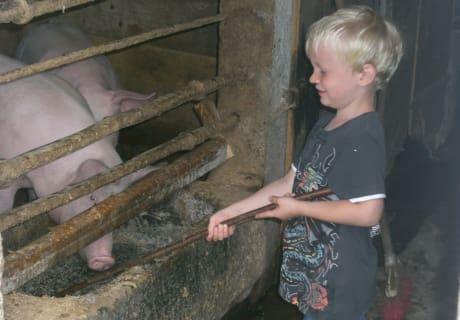 Maxl bei den Schweinen