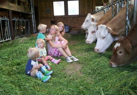 Beim Kühe füttern mit dabei sein