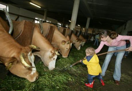 Beim Füttern im Stall darf man gerne helfen - Biohof Schafflhof