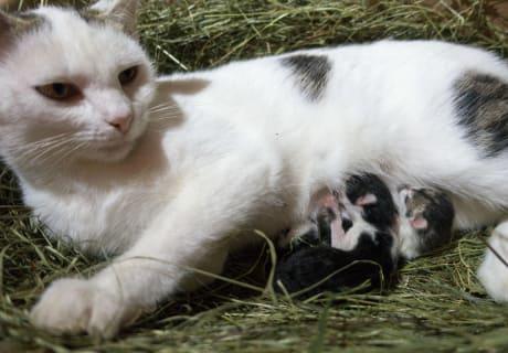 Katzenmama mit Katzenbabies