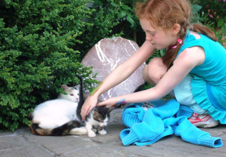 mit den Katzen spielen