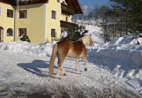 Die Pferde haben auch Spaß auf dem Weg zur Winterweide