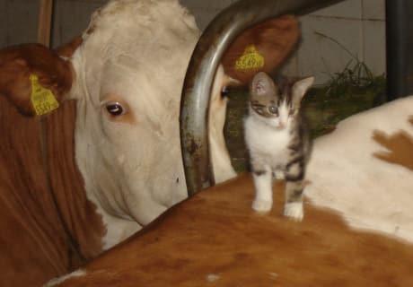 Katze & Kuh