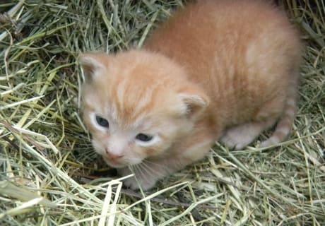 Baby-Katze