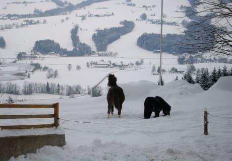 Jara und Calimero im Schnee