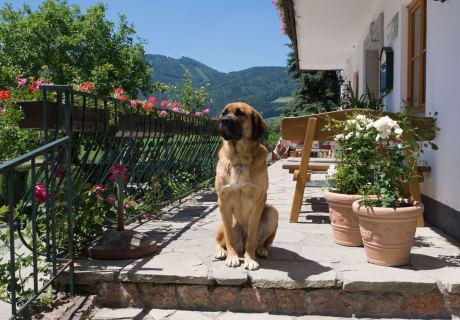 Hund Sara