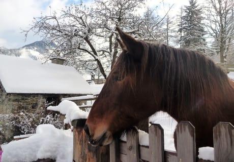 Unsere Norika Pferde