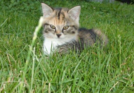 Katzen, sie werden von ALLEN geliebt
