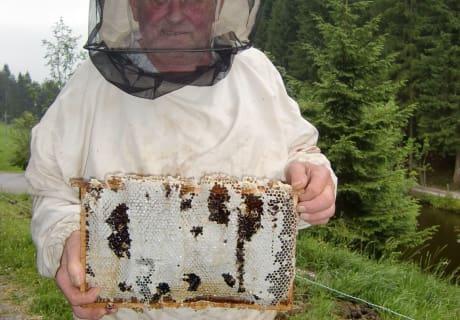 Opa mir einem Honigrahmen