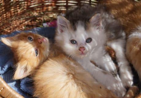 Unsere knuddeligen Babykatzen