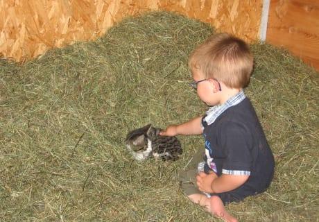 Die Katze genießt die Streicheleinheiten im Heu