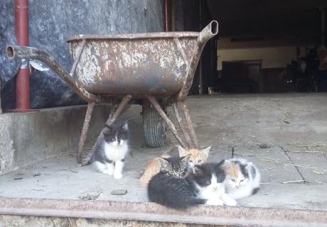 Die Babykatzen genießen die Sonne