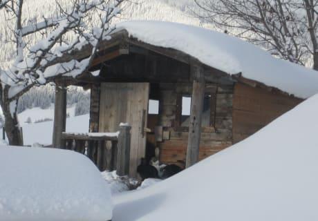Hasenhaus im Winter