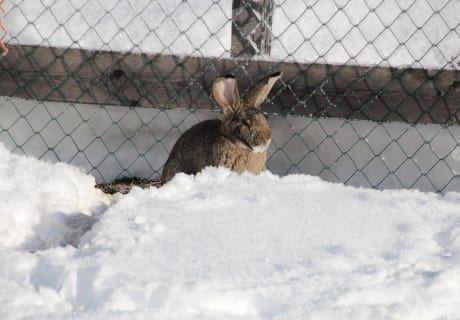 "Hase"" Lumpi"" im Schnee"