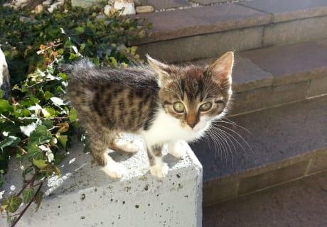 Moritz - eine von unseren Katzen