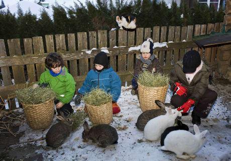 Kinderbetreuung Tierfütterung