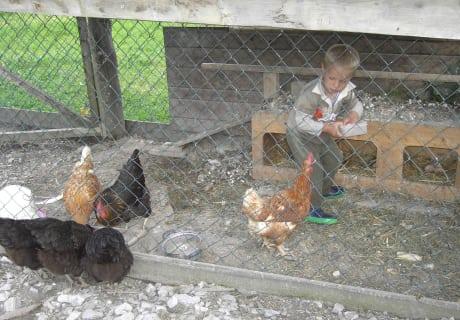 Hühnerfüttern
