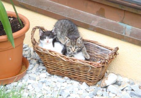 Katzen am Peilsteingut