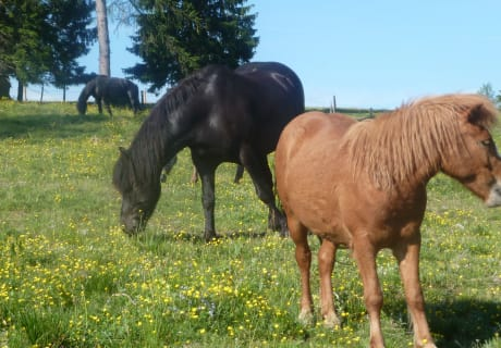 Pferde auf der Alm