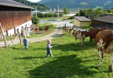 Kinder beim Kühe treiben!