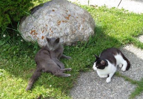 Unsere Katzen Tom und Jerry