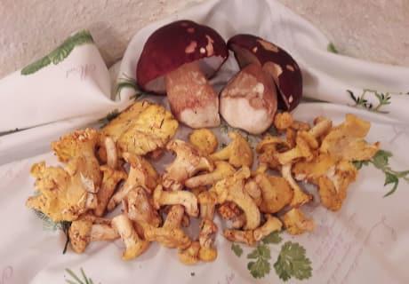 Pilze & Schwammerl