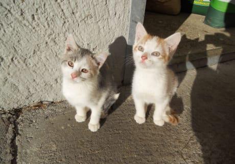Molly und Balu