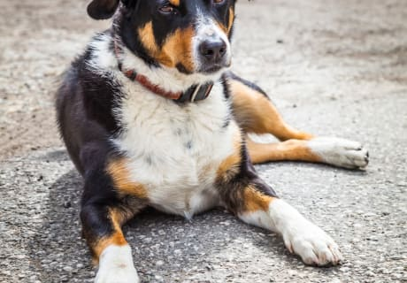 Hofhund Max