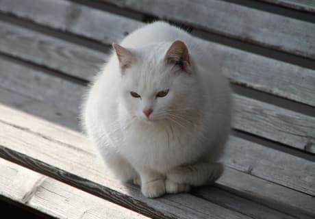 Katze Luna
