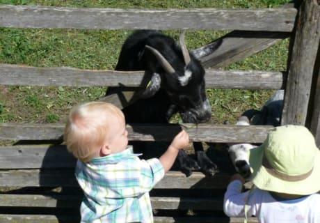 Kinder beim Ziegen füttern