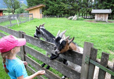 Unsere Ziegen haben immer Hunger!!