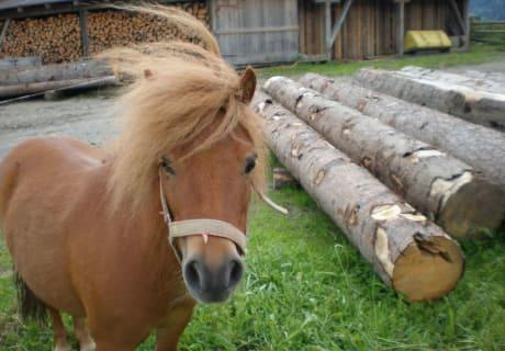 """Pony """"Maxi"""""""