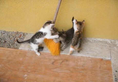 Die kleinen Katzen beim Spielen