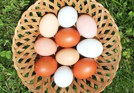 bunte Eier zum Frühstück