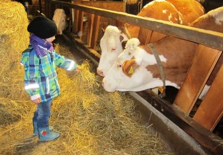 Ein Highlight für die Familien ist immer wieder das Tiere füttern...