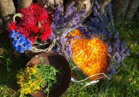 A composition of herbs and flowers by our herb expert, Trude