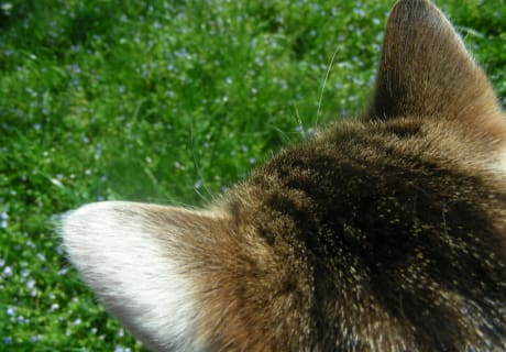 aus der Sicht der Katze