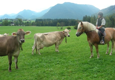 Mexx und die Kühe