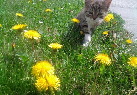 Katze Lucy
