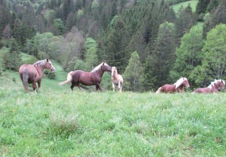Unser Pferde auf der Weide