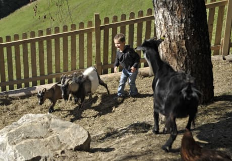 Kinderspielplatz mit Tieren
