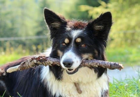 Our dog Bella