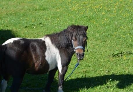 Pony Kimberley