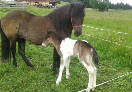 Unsere Pferde zum Ausreiten