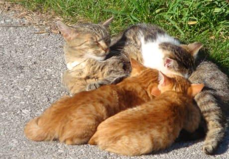 Katzenjunge beim Mittagessen