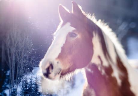 Boby unser cooles Pferd