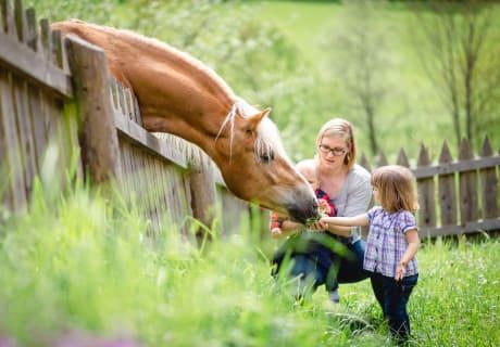 Besuch von den Pferden