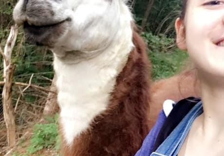 Wandern mit den Lamas