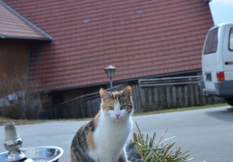 Unsere Katze Shiva