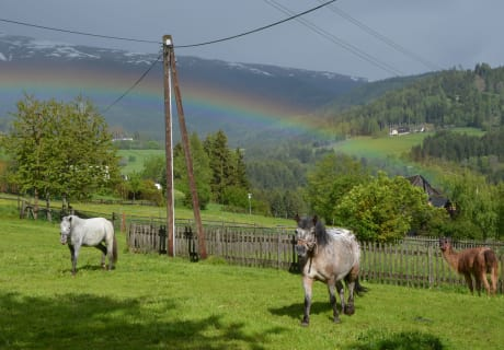 das Pony mit dem Regenbogen